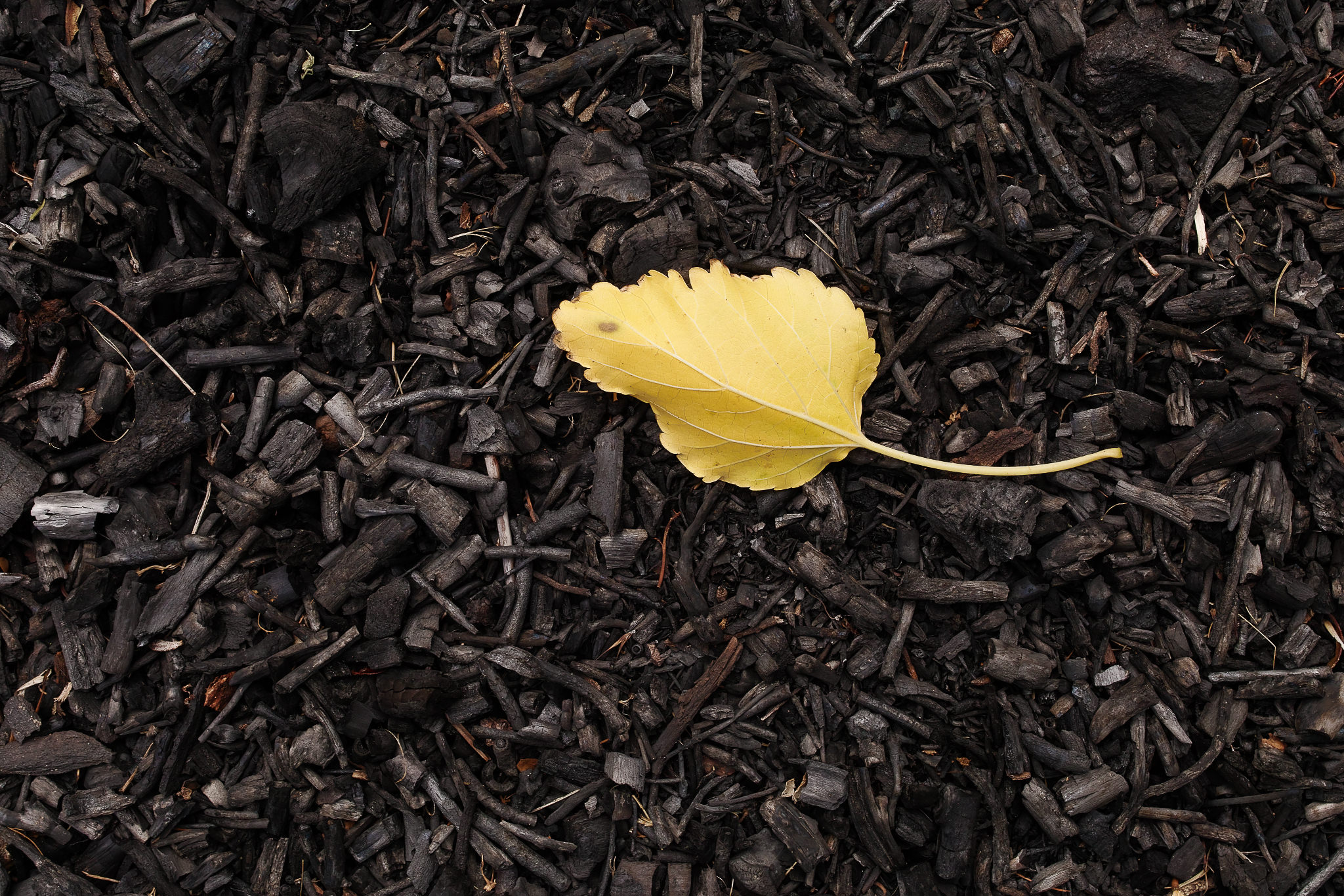 About Creative Instinctive Daily Photo Challenge - Yellow Leaf